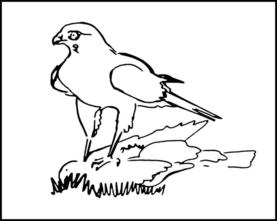 Hawk and Dove: the spoils of generous bird feeding.