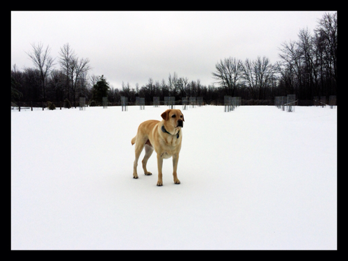 """Griffin listening to the cold snap """"thunder"""" booming..."""