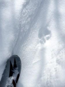 Fox Track & Ski Tip