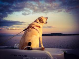 Incredible silky-glass lake water, wowowow-sunset-skies: Griffin on the back of the ski boat barking to protect his mama whose gone waterskiing. Aaawwww! (Photo: Georgina Goodwin)