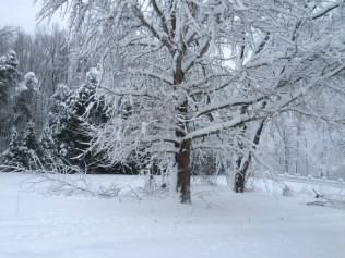 Many of our trees were damaged during the early December 2014 snowfall.