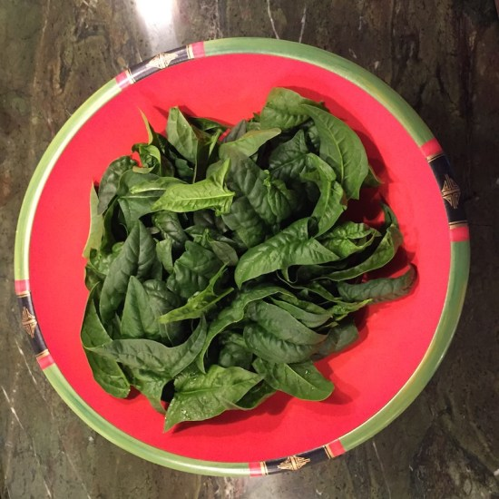 Spinach: From early spring until late autumn spinach, spinach, spinach,... (Source: Geo Davis)