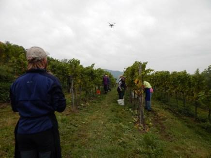 Auch ein neues Video zur Weinlesen 2015 ist in Arbeit