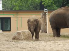 Zoo Berlin - Elefant Edgar