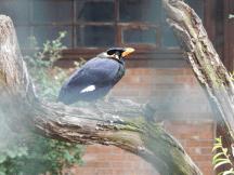 Zoo Berlin - Beo