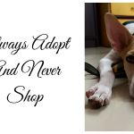 Always Adopt And Never Shop