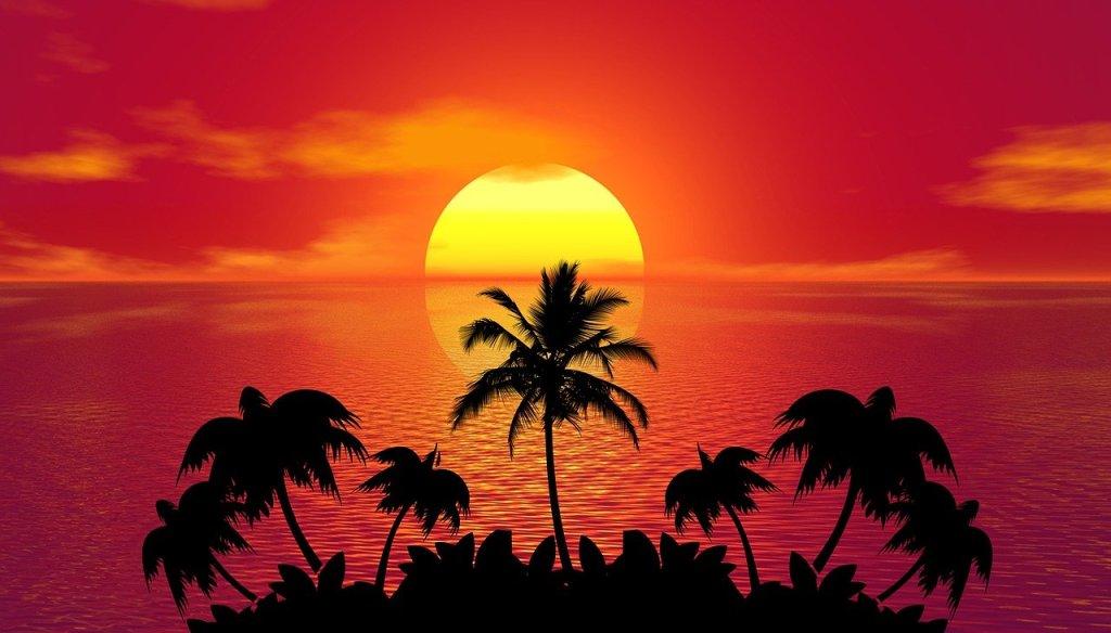 sunset, palm trees, silhouettes-1651426.jpg