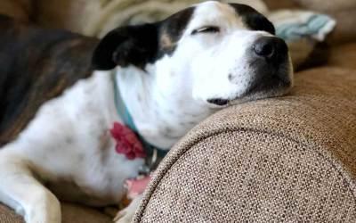 Come posso aiutare Frank a salire sul divano come una volta?