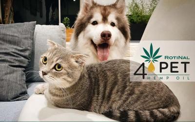 Quale olio di Canapa scegli per il tuo cane o il tuo gatto?