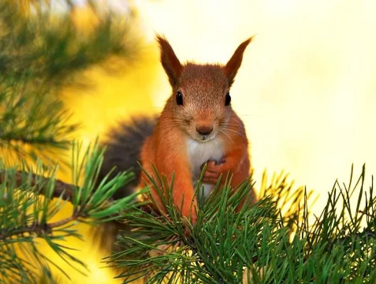 Esquilos adoráveis
