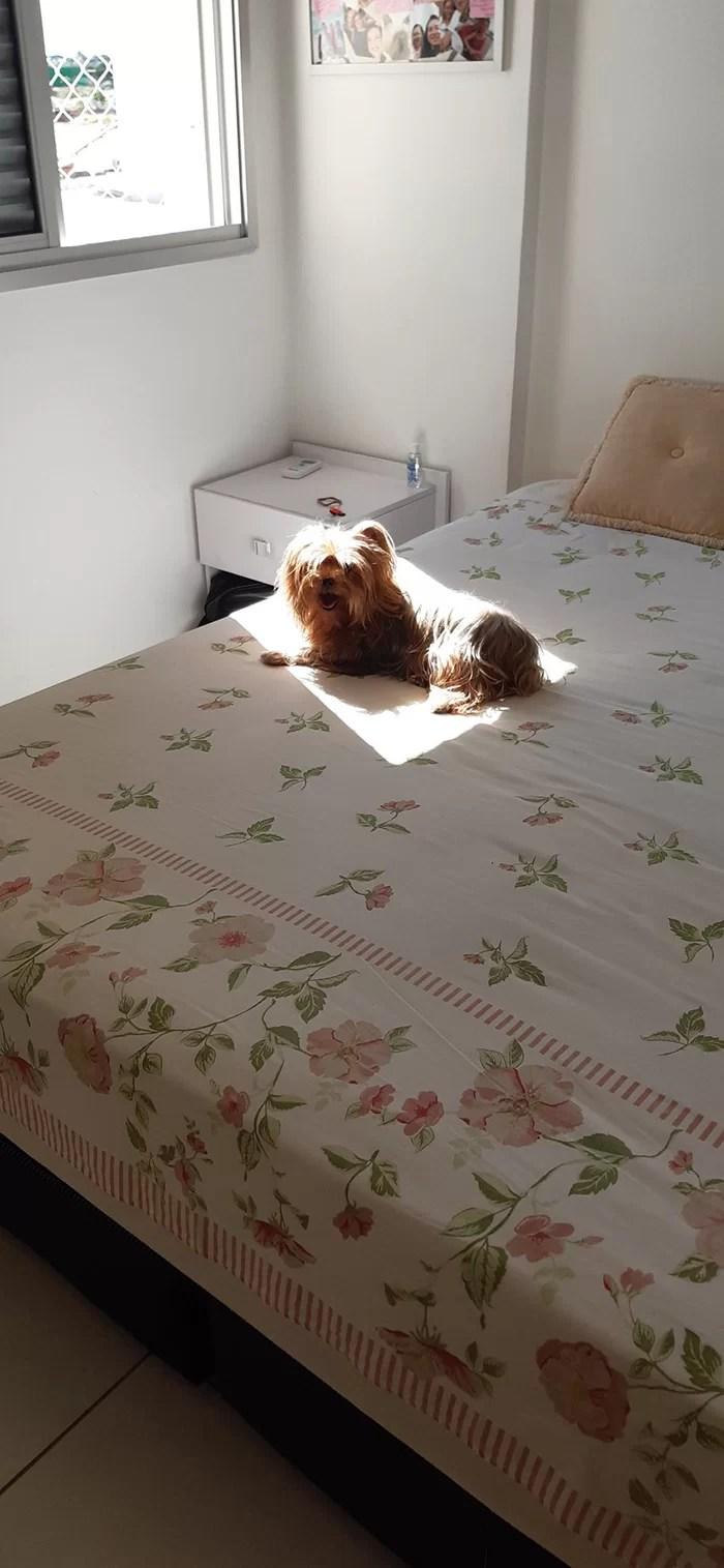 Animais tomando sol