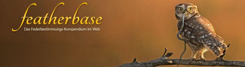 www.featherbase.info