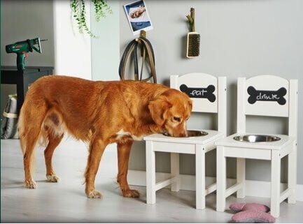 Come fare una ciotola per cani?