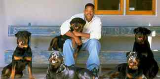 Will-Smith-rottweiler