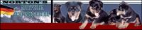 rottweiler-banner-960x205.png