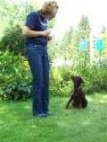 rottweiler-puppy-in-training-rachael.jpg