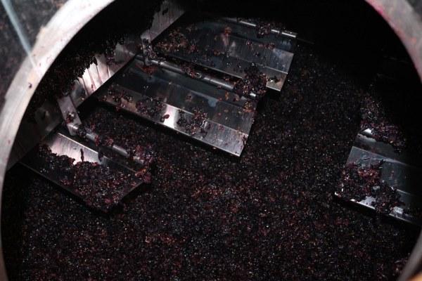 Rotweinherstellung
