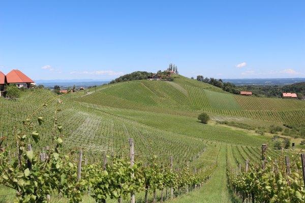 Südsteiermark_Wein.7