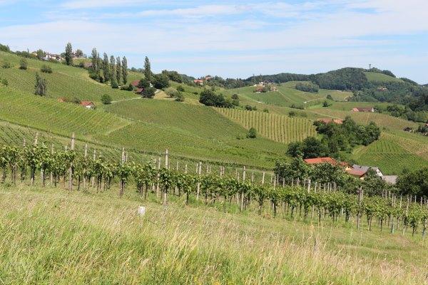 Südsteiermark_Wein.9