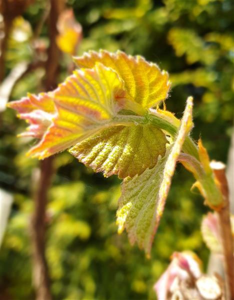 Wein im Garten - Weinfrühling 2019