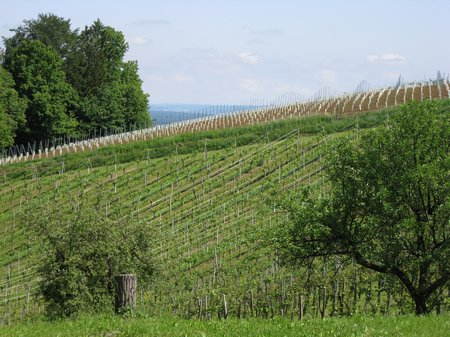 Südsteiermark Ratsch-an-der-Weinstrasse