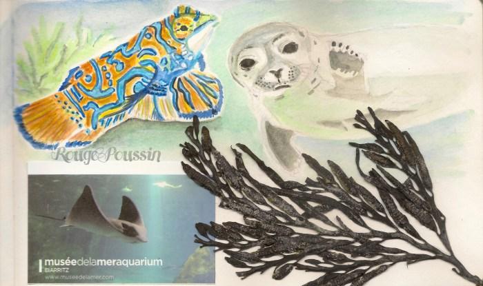 Aquarium de Biarritz : extrait de mon carnet de vacances.