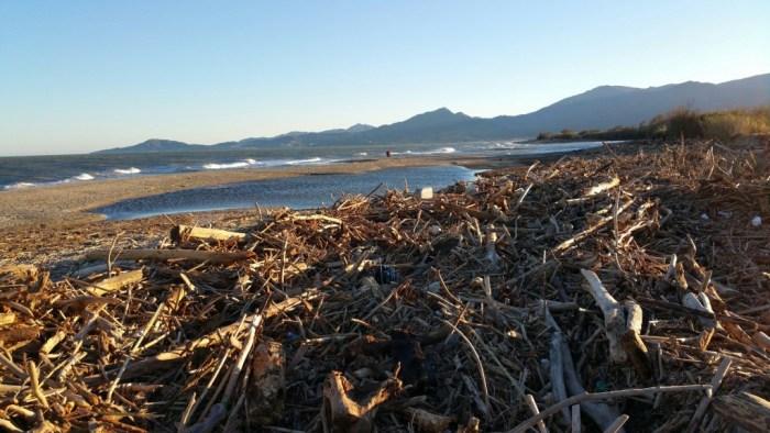 Bord de mer où le bois flotté s'échoue