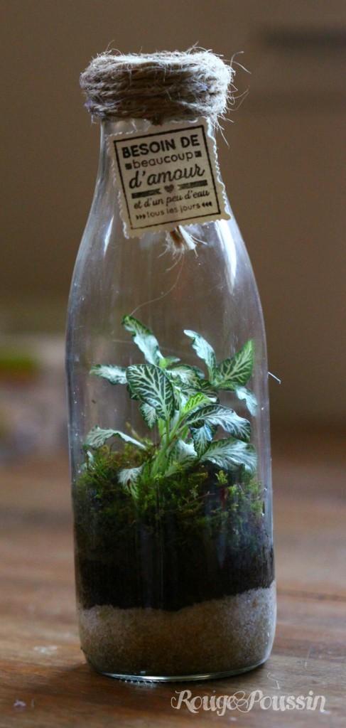 Mini-terrarium comme idée cadeau pour les fêtes.