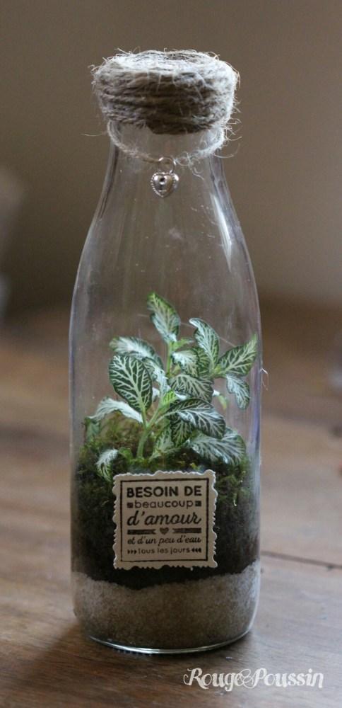 Idée cadeau : offrir un mini-terrarium