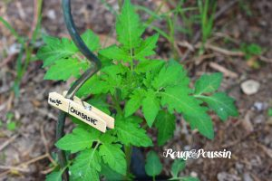 Etiquettes de Jardin : DIY Express ...