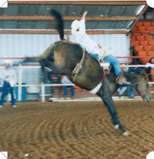 2012 C-T Bronc Bash Bucking Horse Futurity