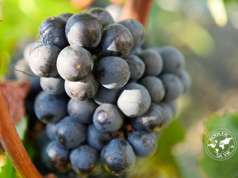 casadea-raisins