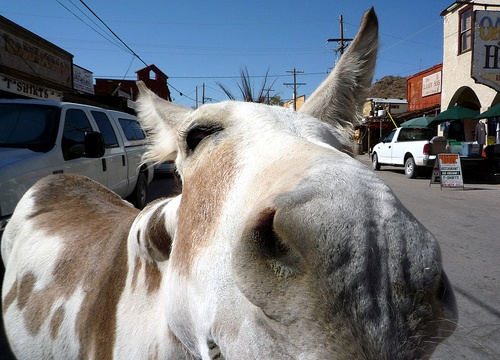 County adds signs in Oatman prohibiting the feeding of wild burros in the roadway