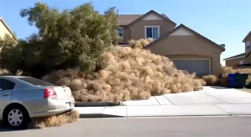 Tumbleweeds invade Route 66 town of Victorville