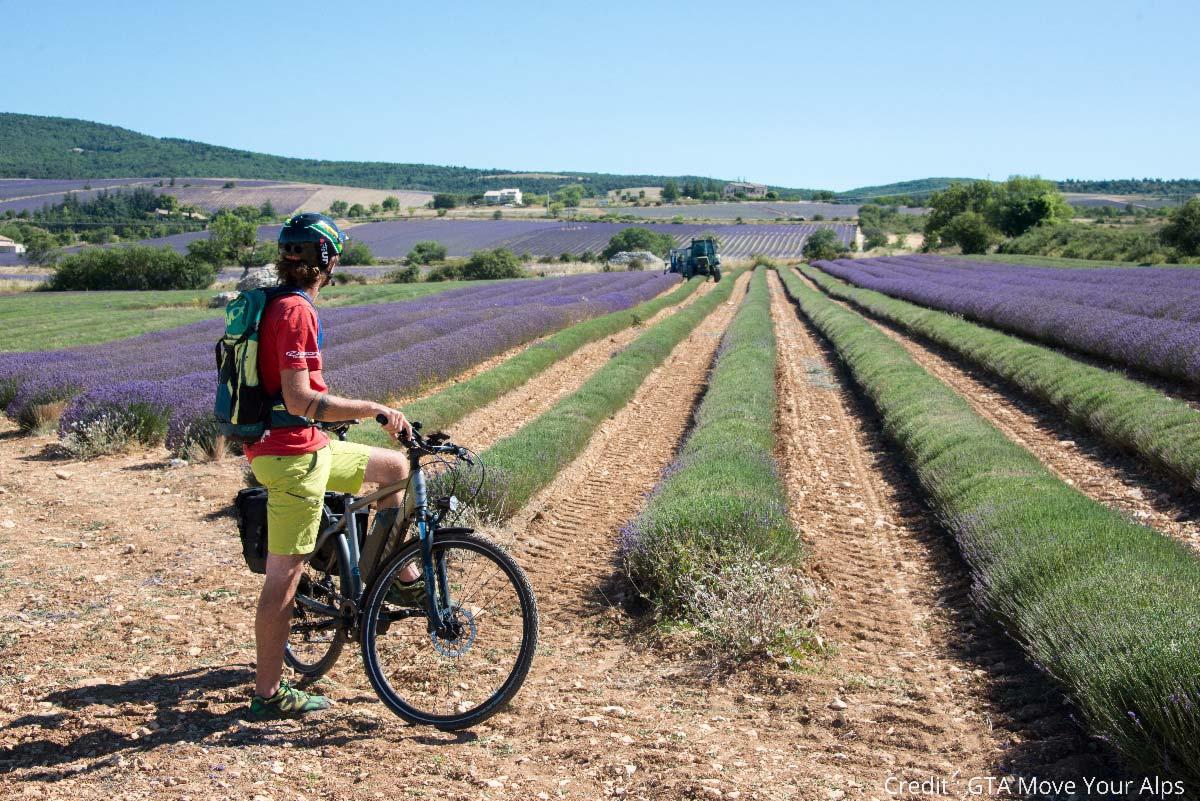 voyage à vélo dans la lavande