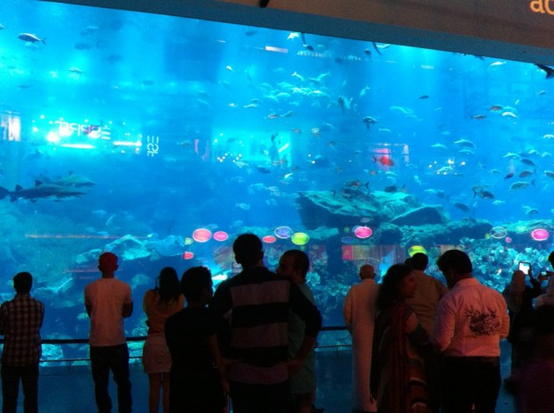 Aquarium at Dubai Mall