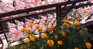 Flowers and drying fish at Ban Phe
