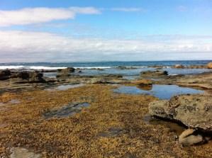 Low tide at Bunurong