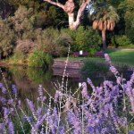 Plants in the Royal Botanic Garden, Melbourne