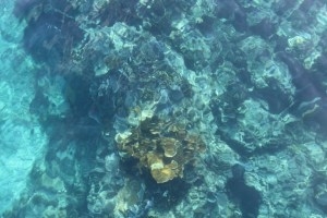 Corals at John Pennekamp Coral Reef State Park