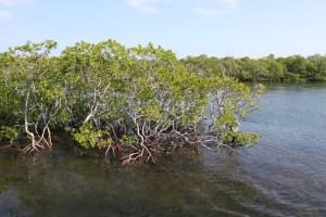 Hammock at John Pennekamp Coral Reef State Park