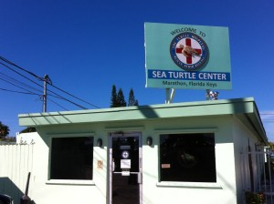 Sea Turtle Center, Marathon, Florida Keys