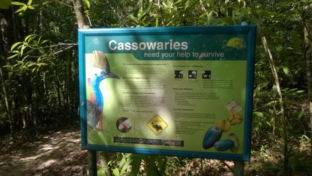 Learning about cassowaries, Jindalba Boardwalk