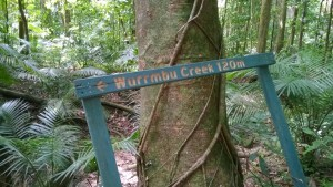 Wurrmbu Creek in Mossman Gorge, Daintree National Park