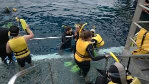 Snorkeling at Agincourt Reef pontoon