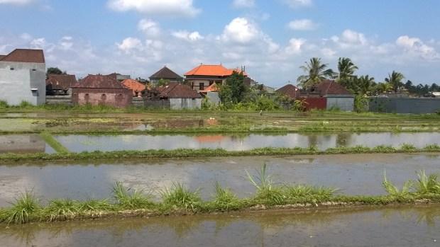 Water filled Bali rice paddies