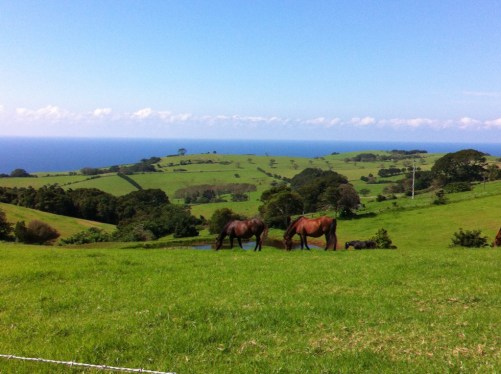 Kiama countryside