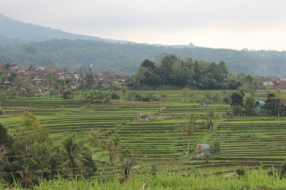 Jatiluwif village and rice terraces