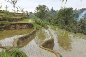 Terraces in Jatiluwif, Bali day trip by car
