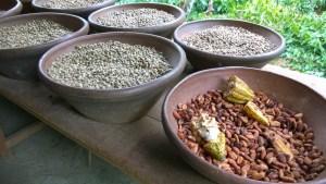 Balinese plantation products